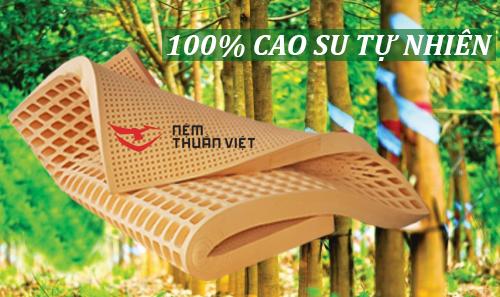 Nệm cao su thiên nhiên Thuần Việt LATEX có tốt không
