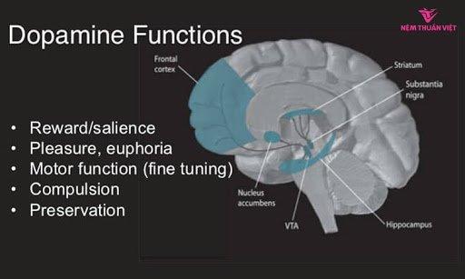 Chất dẫn truyền thần kinh Dopaminergic là gì